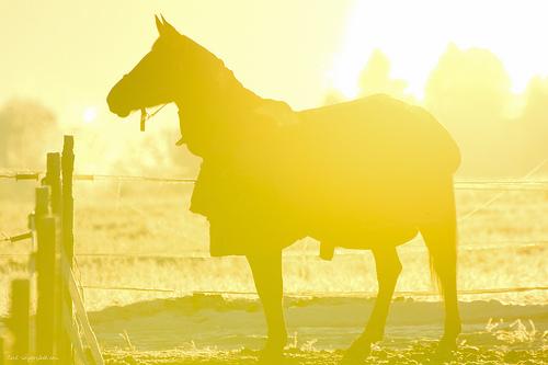 Horse in the sun..
